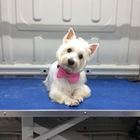 arley dog grooming dog